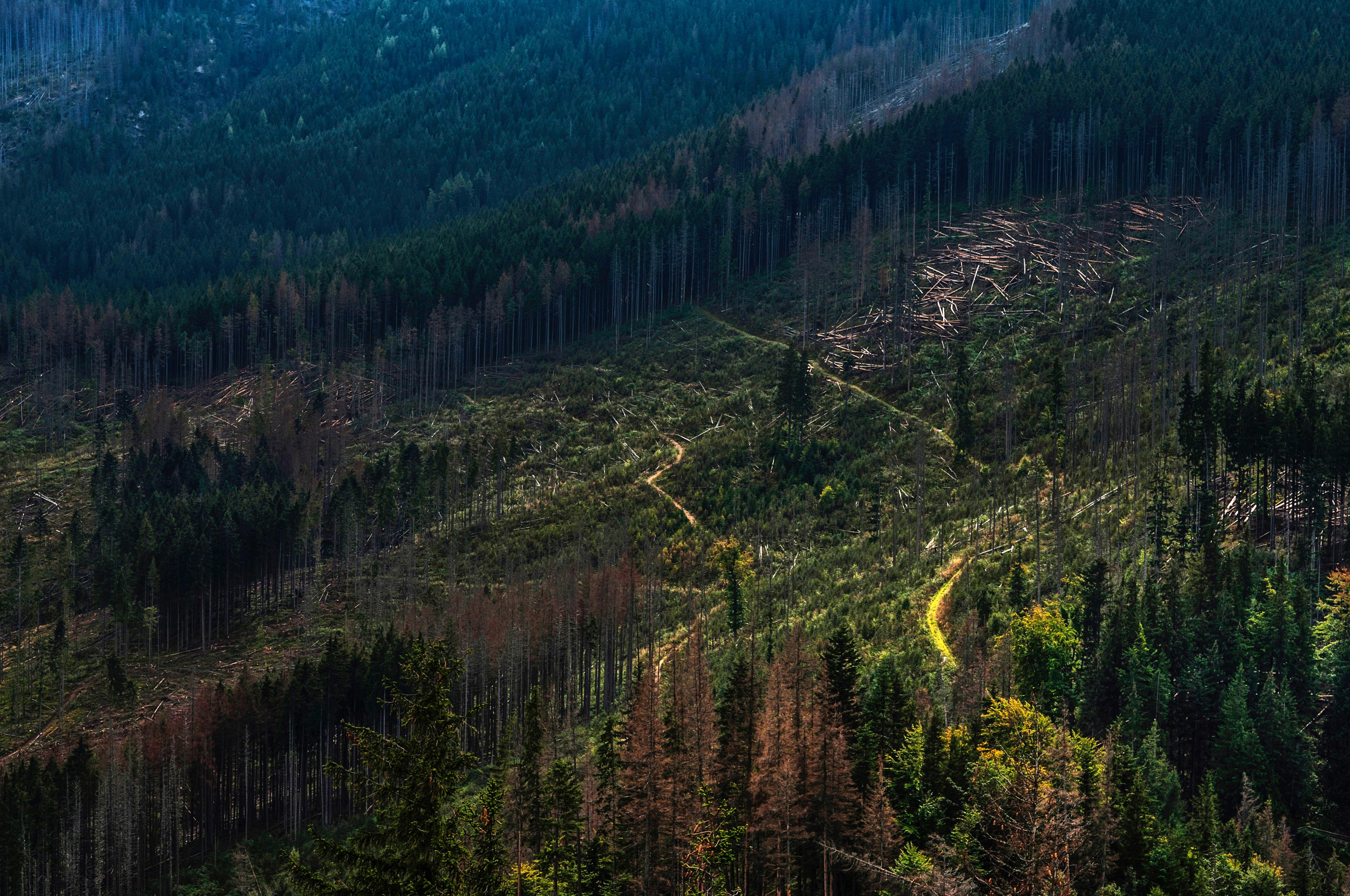 la déforestation et disparition de la biodiversité